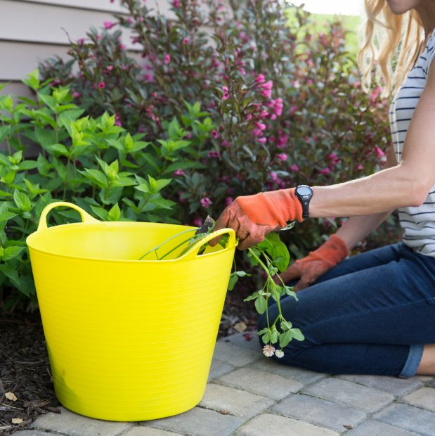 Give your garden a spring clean after winter